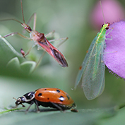 Beneficial Insects & Organisms