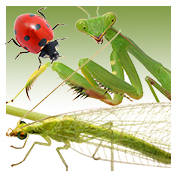 Beneficial Insects - Generalists
