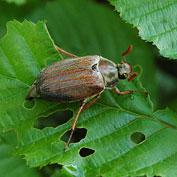 Identify Your Pest