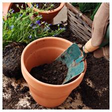 Soil Mediums