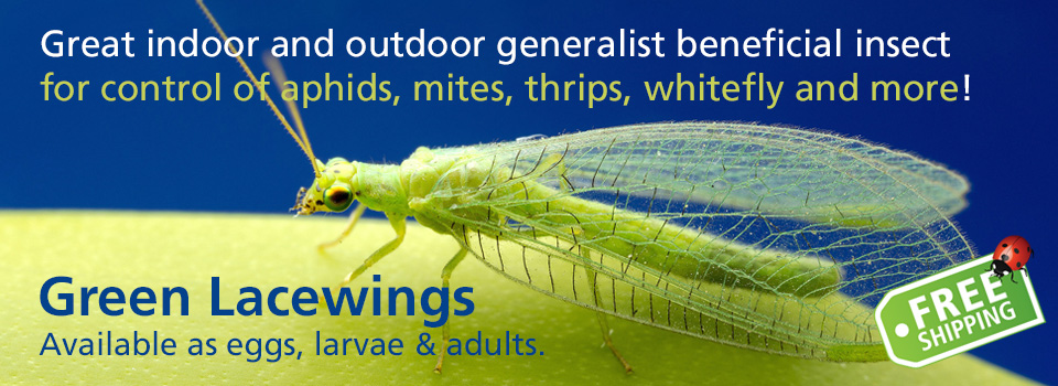 Green Lacewing Control Whitely, Aphids, and More