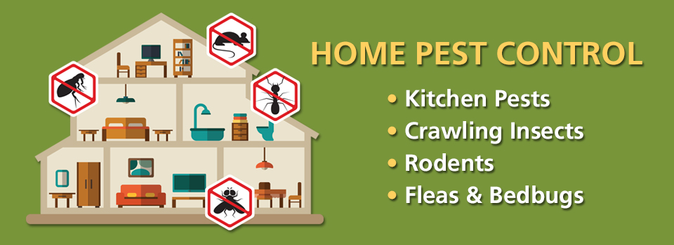 Control Pesky Bugs and Animals In and Around the Home