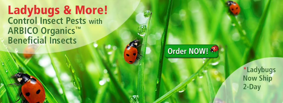 Beneficial Insects For Home & Garden Pest Control