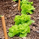 Preparing Your Soil For Spring Planting