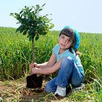 Trees For Life - New Tree Care