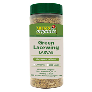 Green Lacewing Larvae in Bottle - 1000