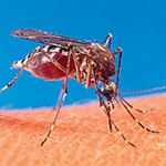 West Nile Virus Hits Again