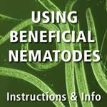 Beneficial Nematode Information & FAQs