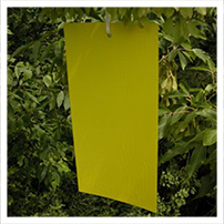 Stiky Strips® Yellow Sticky Traps - 9 Pack