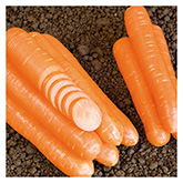 SERO Biodynamic® Seeds - Nantaise Narome Carrot