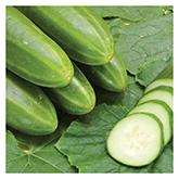 SERO Biodynamic® Seeds - Persika Cucumber