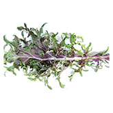 SERO Biodynamic® Seeds - Red Russian Kale