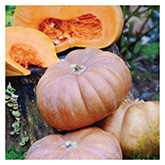 SERO Biodynamic® Seeds – Fairytale Pumpkin