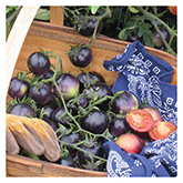 SERO Biodynamic® Seeds - Indigo Rose Tomato